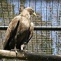 ogród zoologiczny w Libercu #zoo #Liberec #czechy #zwierzęta