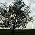 przed zachodem...;) #zachód #ZachódSłońca #drzewo #wiosna #Wiosna2010