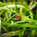 #ślimak #akwarium #natura #hobby