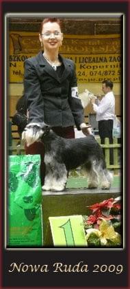 japanese chin , japanese chin puppies , chin japoński , hodowla chinów , opole 2010 , wystawa w opolu , klubowa wystawa psów do towarzystwa , bis baby , spirited away