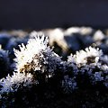 Pierwszy dzień przymrozków, zwykła ziemia i troszkę zamarzniętej wody. #Zima #lód #śnieg #szron #makro #słońce #świt #Malownicze