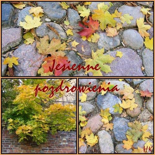 Pozdrawiam jesiennie wszystkich-Halina #liście #jesień #kolory