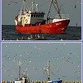 Powrót z łowiska, zawsze w licznym towarzystwie! #rybacy #powrót #mewy #kutry #GórkiZachodnie