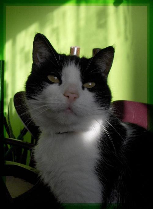 Moja Piki #koty