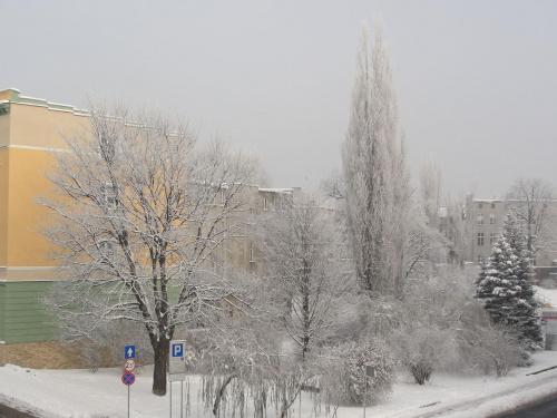 Krajobraz po mglistej nocy, i temperaturze -23 Stopni #zima #święta #śnieg #miasto #Racibórz #Raciborz #śląskie #slaskie #mróz #ozdoby #świąteczne #szadź #szadz