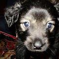 #pies #psiak #szczenię #zwierzęta