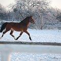 #Arkadia #Boy #ogier #Probus #ślązaki #TedyBoy #Tuzera #WielkaLipa #konie #stadnina
