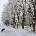 #zima #droga #drzewa #szron