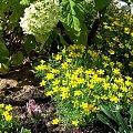 #kwiaty #ogrodowe