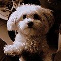 Cocaina zła dziewczyna xD #Cocaina #pies #zwierzę