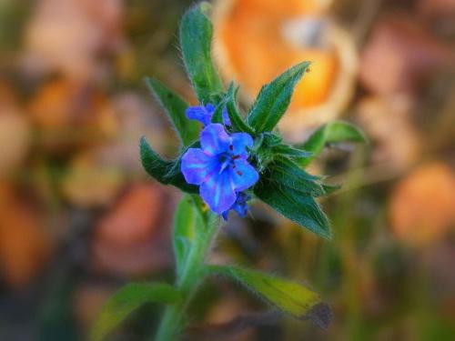 """jedyny kwiatek po drodze dla """"leśnej ani""""... #KwiatekZLasu"""