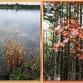 trochę fotek jesiennych...nad Wisłą #jesień #collage #NadMorzem #liście #trawy