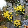 Jesień na cmentarzu #ŚwiętoZmarłych #NaCmentarzu #jesień #listopad
