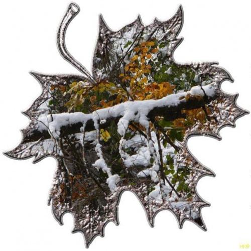 Pożegnanie jesieni ale inaczej #liść #inaczej #przeróbki #jesień #śnieg