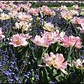 #kwiaty #Łazienki #tulipany #wiosna #Wiosna2011
