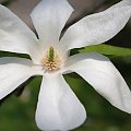 #kwiaty #kwiat #ogrody #ogród #piękno #przyroda #wiosna