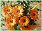 http://images37.fotosik.pl/80/0114c09de7aa705am.jpg