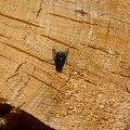 muszka #mucha #drewno #owad