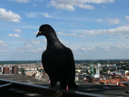Widok z wieży widokowej W Wrocławiu #PtakPanorama