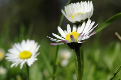 #Przyroda #Kwiaty