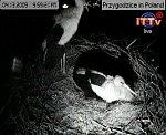 http://images37.fotosik.pl/99/ffcf37193d253432m.jpg