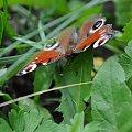 #motyle #motylki #zwierzęta #wakacje